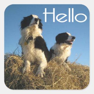 Hello Black And White Border Collie Puppy Dog Square Sticker