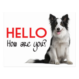 Hello Border Collie Puppy Dog Post Card