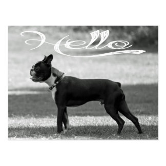 Hello Boston Terrier Puppy Dog Greeting Post Card