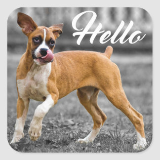 Hello Boxer Puppy Dog Greeting Square Sticker