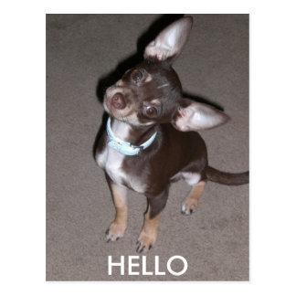 HELLO Chihuahua Postcard