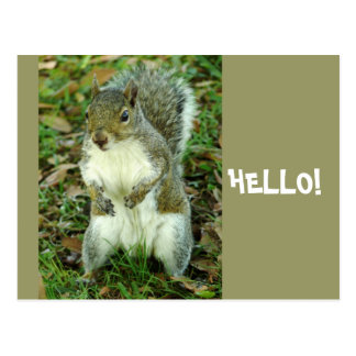 Hello, Cute standing squirrel Postcard