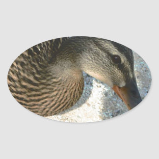 Hello Ducky Oval Sticker