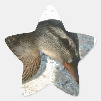 Hello Ducky Star Sticker