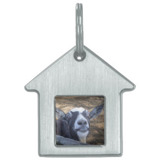 Hello Friendly Goat Pet Tag