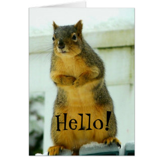 Hello from Squirrel Card