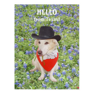 Hello from Texas! Postcard