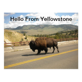 Hello From Yellowstone  Postcard