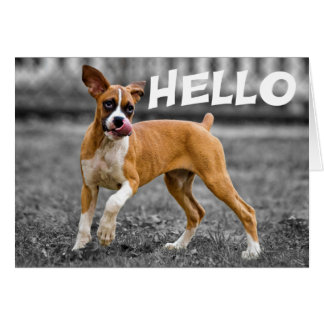 Hello / Hi Boxer Puppy Dog - Friendship, Miss You Card