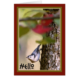 Hello - Nuthatch Greeting Card