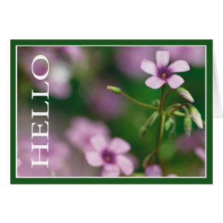 Hello - Pink Wood Sorrel Greeting Card