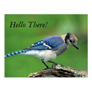 Hello There Blue Jay Post Card