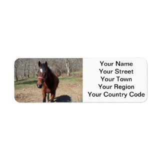 Hello There Horsey Return Address Label