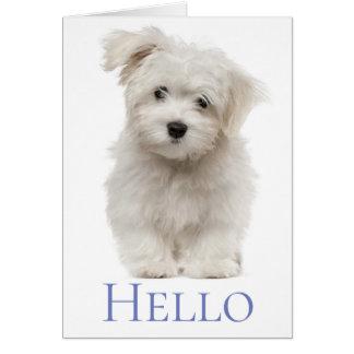 Hello White Maltese Puppy Dog Thinking Of You Card