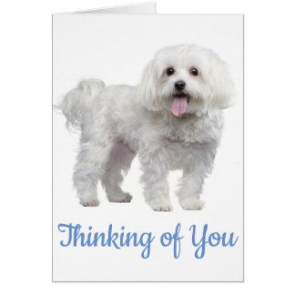 Hello White Maltese Puppy Dog Thinking Of You Card