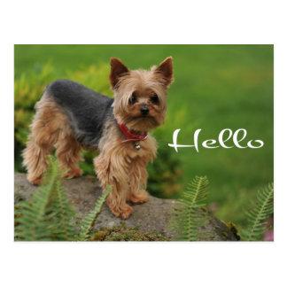 Hello Yorkshire Terrier Puppy Dog Post Card