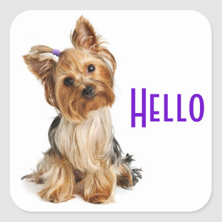 Hello  Yorkshire Terrier Yorkie Puppy Dog Stickers