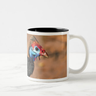 Helmeted Guinea Fowl (Numida meleagris). Africa, Two-Tone Coffee Mug