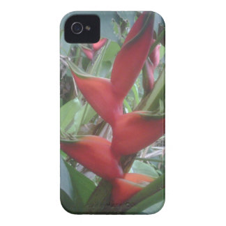 Heloconia iPhone 4 Cases
