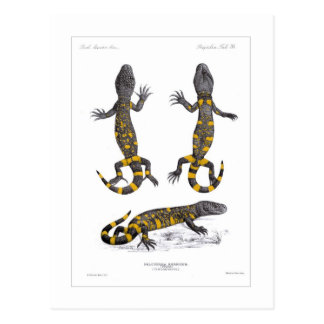 Heloderma Horridum (Beaded Lizard) Postcard