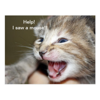 """Help i saw a mouse!"" Postcard"