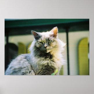 Hemingway cat 2 - Poster & Print