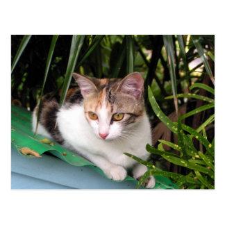 Hemingway Cat Postcard