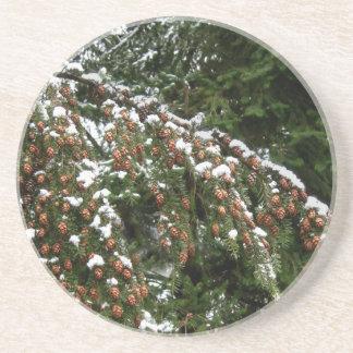 Hemlock with Lowland Snow - Olympia WA Coaster