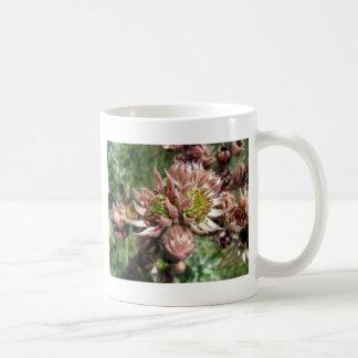 Hen and chicks (Sempervivum) flowers Coffee Mug
