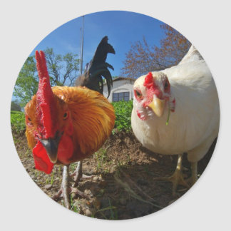 hen and rooster round sticker