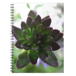 Hen 'n' Chicks Notebook/Journal Notebooks