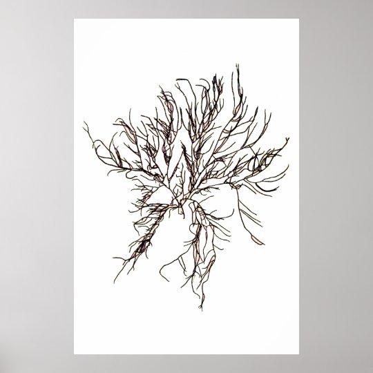 "Henry Bradbury""s Pressed Seaweed Sixth Of Ten Poster"