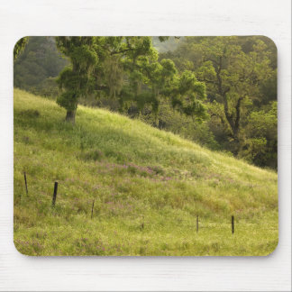 Henry Coe Hillside at Dawn Mouse Pad
