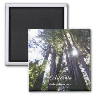 Henry Cowell Redwoods Magnet
