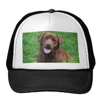 Henry's Waiting Trucker Hat