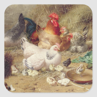Hens roosting with their chickens square sticker