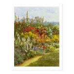 Herb and Flower Border Postcard