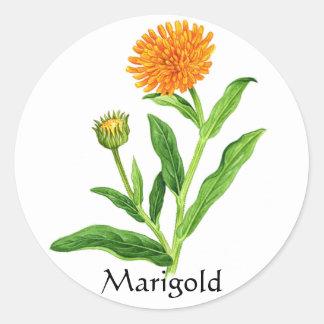 Herb Garden Series - Marigold Classic Round Sticker