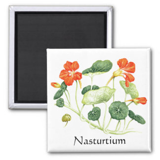 Herb Garden Series - Nasturtium Magnet
