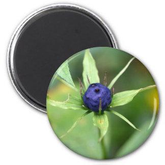 Herb paris (Paris quadrifolia) 2 Inch Round Magnet
