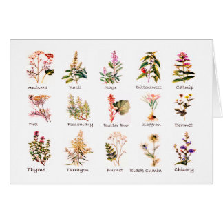 Herbs and Spices Greeting Cards