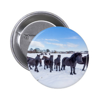Herd of black frisian horses in winter snow 2 inch round button