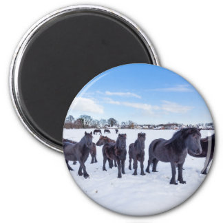 Herd of black frisian horses in winter snow 2 inch round magnet