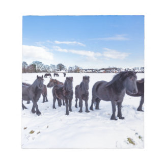 Herd of black frisian horses in winter snow notepad