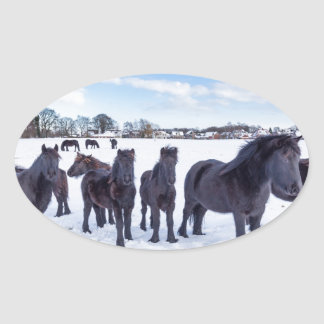 Herd of black frisian horses in winter snow oval sticker