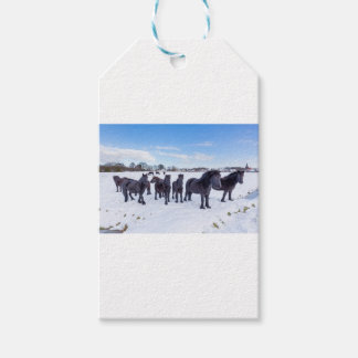 Herd of black frisian horses in winter snow pack of gift tags