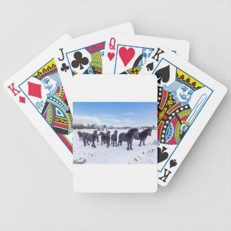 Herd of black frisian horses in winter snow poker deck