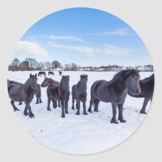 Herd of black frisian horses in winter snow round sticker