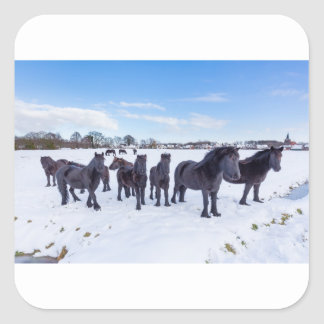 Herd of black frisian horses in winter snow square sticker
