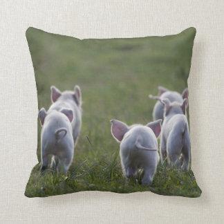 Herd of cute Piglets on pillow